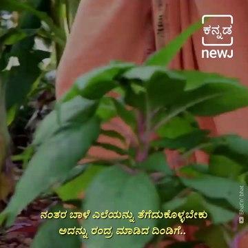 Taste The Culture:Watch How To Prepare Banana Stem Juice