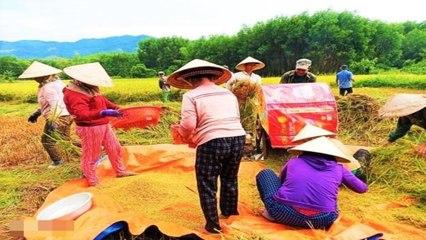 Xóm làng gặt lúa thay cặp vợ chồng cách ly   VTC