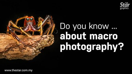 Do you know ... about macro photography?