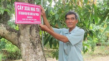 ''Cây xoài nhà tôi'' gắn kết nông dân và người tiêu dùng