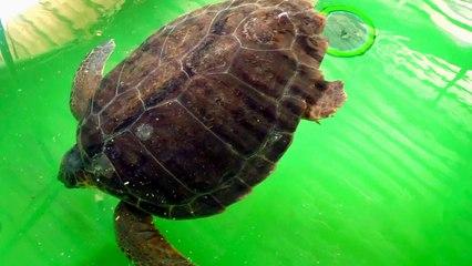 Deniz Kaplumbağaları Rehabilite Merkezi