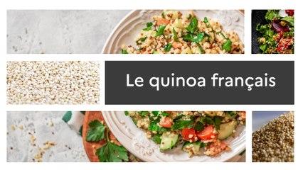 Un produit, un territoire : Tout sur le quinoa français
