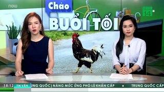 Italy: Bị phạt hơn 4 triệu đồng vì để…  gà gáy quá sớm | VTC