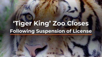 'Tiger King' Zoo Is Over
