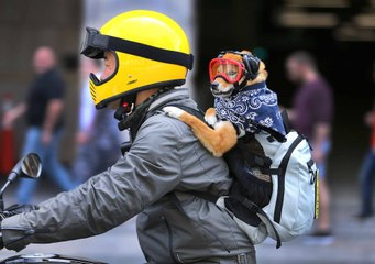 Motorcycle Pets Photo Gallery