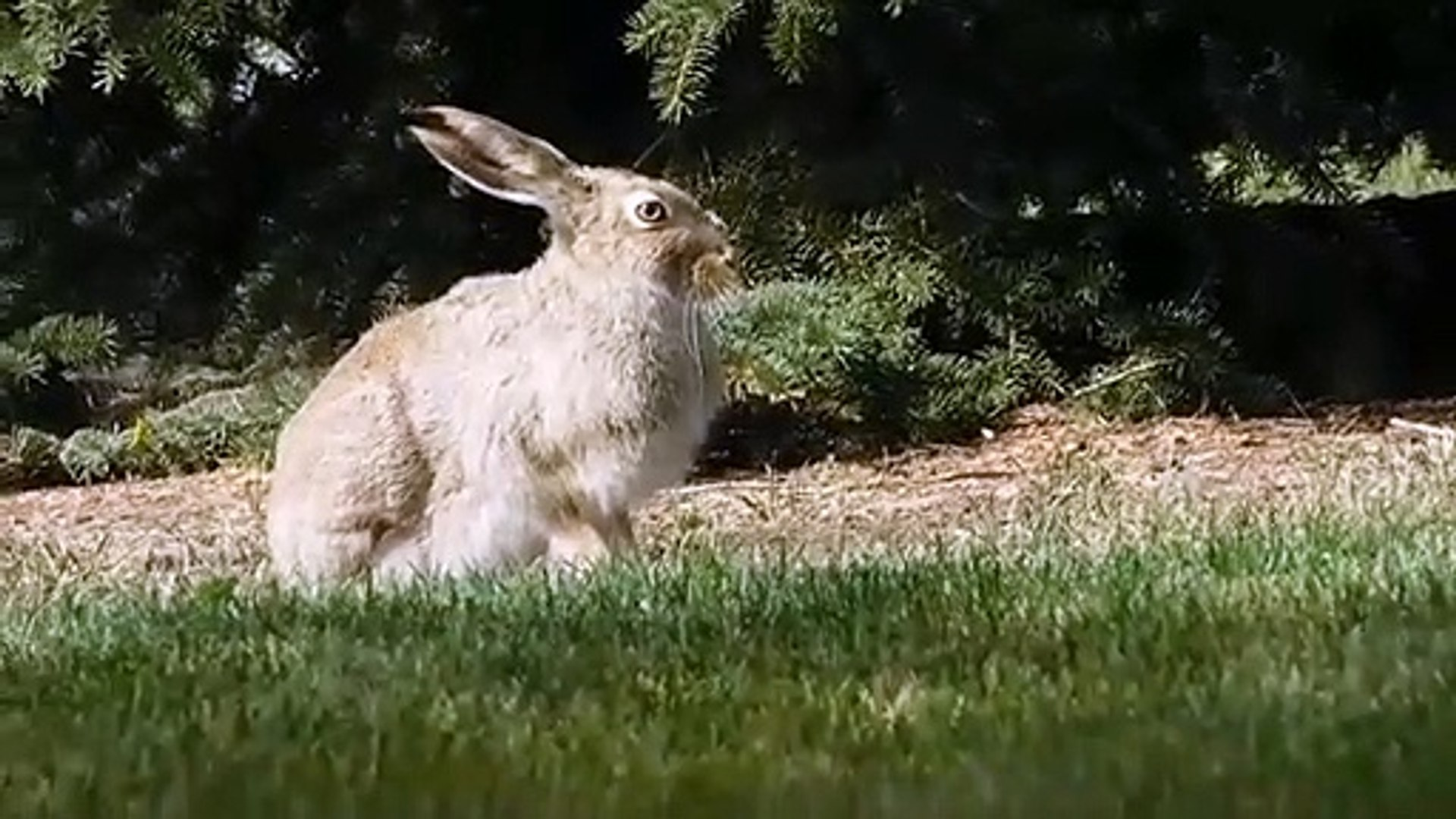 Cute Little Bunnies Playing Video