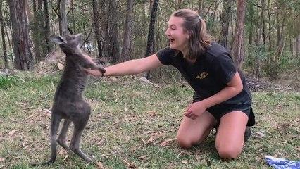 Une soigneuse surprise par un jeune kangourou agité