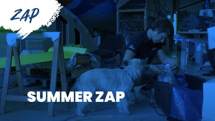 [SUMMER ZAPPING ☀️]