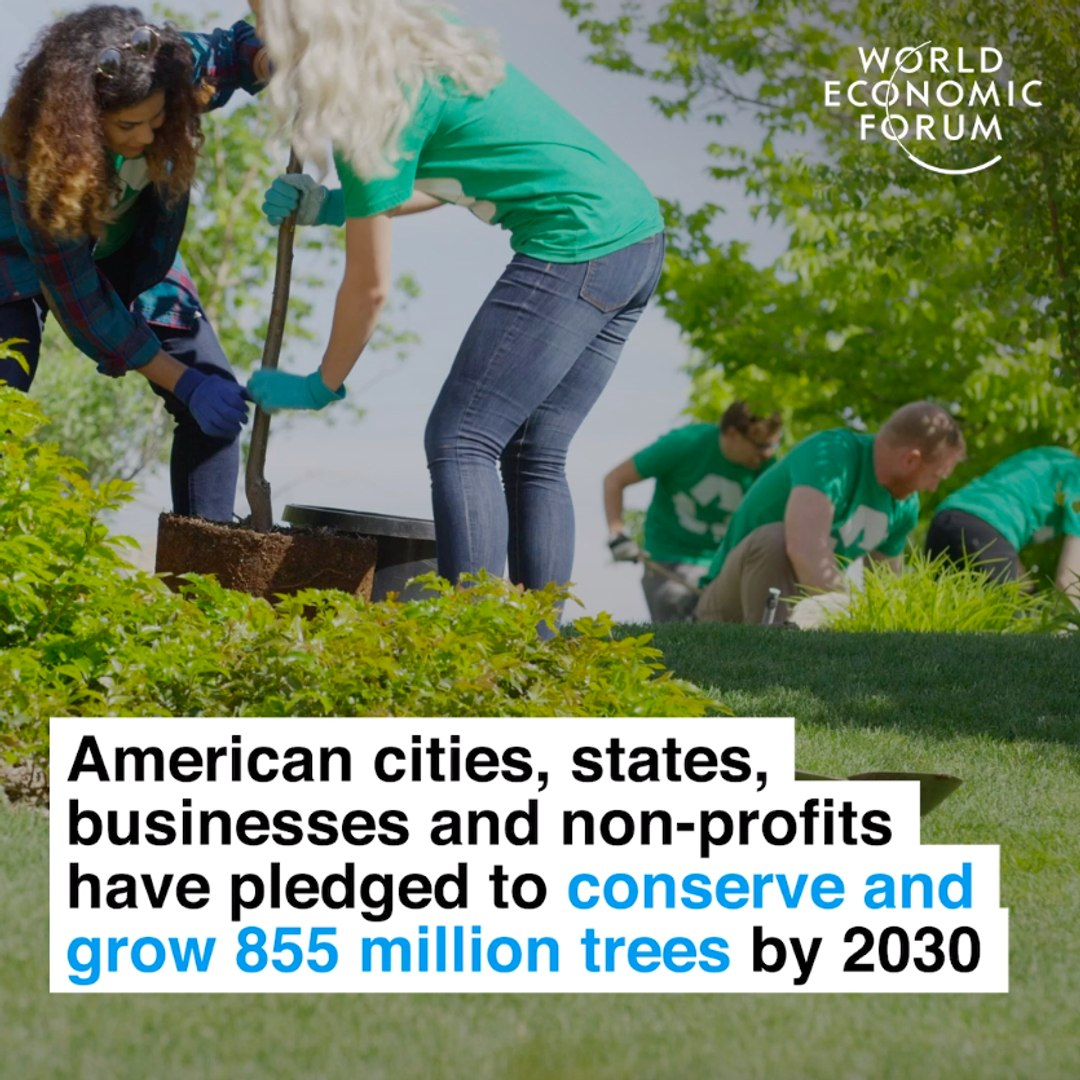 US cities, states, businesses and non-profits have pledged to conserve and grow 855 million trees