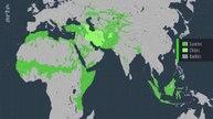 Le dessous des cartes. Islam(s), islamisme(s) quelle géographie ?