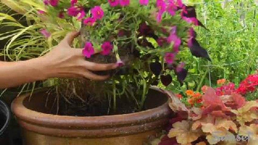 No-fail three-plant pot