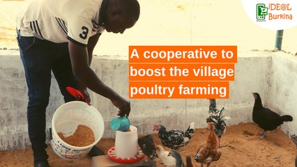 Burkina Faso: A cooperative to boost the village poultry farming