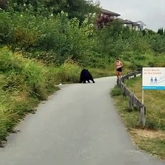 Un ours donne un coup de patte à une joggeuse