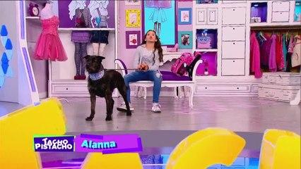 Los Amigos de Tacho   Alanna y sus aventuras con Nacho