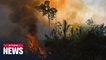 Brazil Amazon fires likely worst in 10 years: Reuters