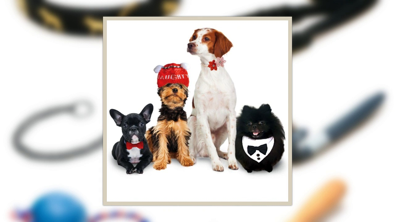 Choose Different Types of Pet Accessories