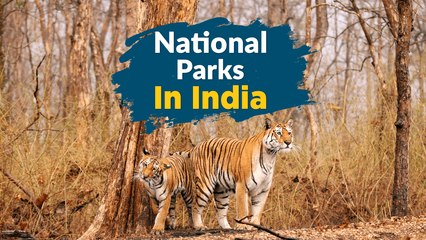 20 Best National Parks In India | Wildlife Sanctuaries India - TravelTriangle
