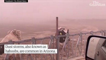 Moment huge dust storm sweeps through Arizona – video