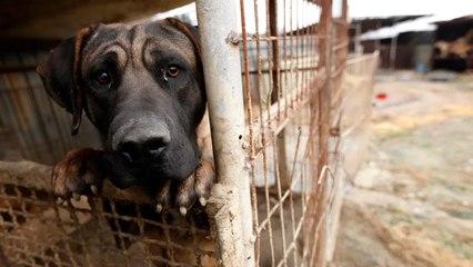Realizan en Escobedo el primer juicio por maltrato animal