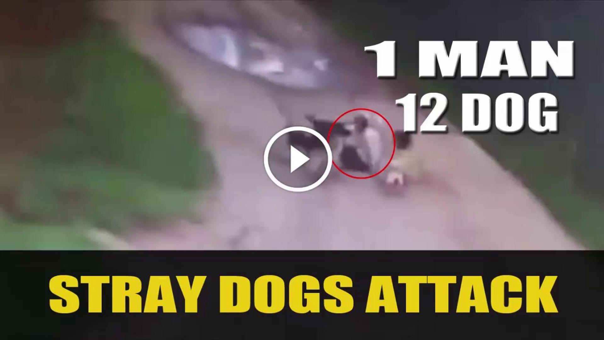 ADAMI OLDUREN KOPEKLER - STRAY DOGS ATTACK