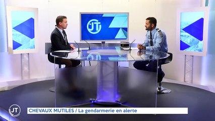 CHEVAUX MUTILÉS / La gendarmerie en alerte