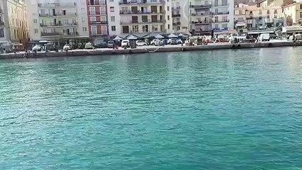 SETE - Des dauphins dans le canal