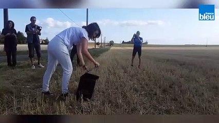 Un busard cendré reprend sa liberté dans l'Indre