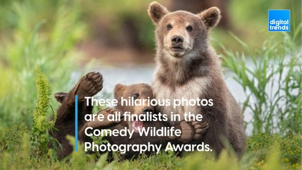 These hilarious photos are all finalists in the Comedy Wildlife Photography Awards