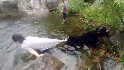 Un chien un peu trop protecteur avec son maitre  baignade interdite
