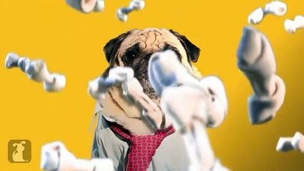 The Wolf of Wall Street (Cute Pug Version)
