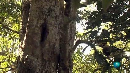 LA FUERZA DE LA VIDA, Los Ghats occidentales (India)  (Loris esbelto, zorro volador, oso pezudo) - GRANDES DOCUMENTALES