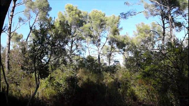 Forêt saccagée à La Londe(83)