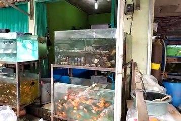 Aktivitas Penjualan Bibit Ikan dan Hias di Pasar Parung