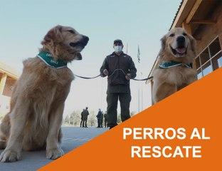 Cápsula 28 - Perros al Rescate