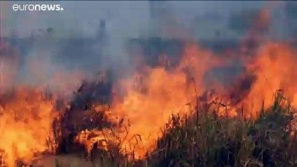 شاهد: الحرائق تتجدد وتلتهم مساحات شاسعة في غابات الأمازون