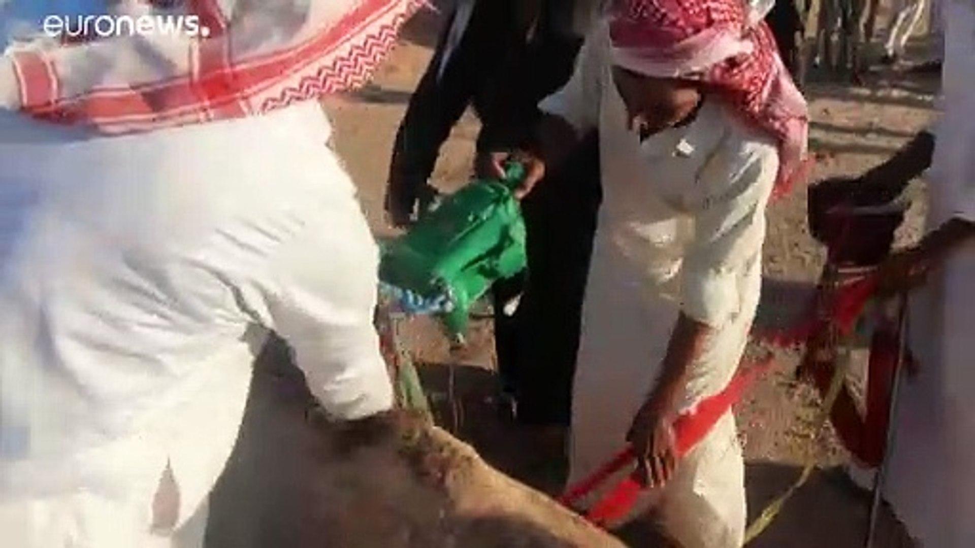 شاهد.. سباق الهجن يعود إلى سيناء رغم أزمة فيروس كورونا