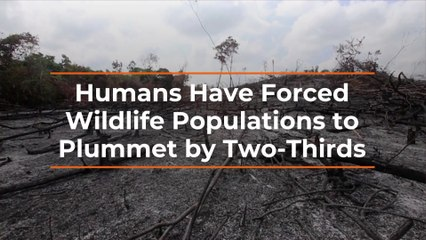 Humans Push Out Wildlife