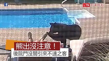 有bear來!漫步住家泳池嗅摸腳 熊見男驚醒嚇到快溜