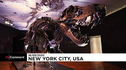 Stan, un T-Rex aux enchères à New York