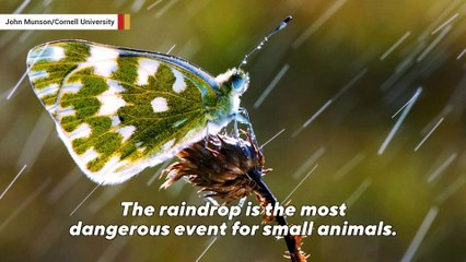 Insects have special armor for protection against raindrops