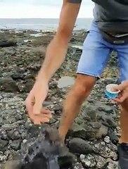 Denuncian la presencia de piche en el litoral de Granadilla por efectos del puerto
