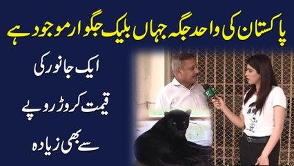 Pakistan ki wahid jaga jaha Black Jaguar mojud hai, aik janwar ki qeemat crore ropay se b ziada...