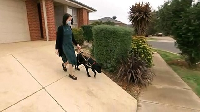How guide dogs and their owners are navigating the pandemic