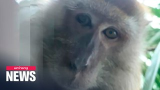 Malaysian man finds 'monkey selfies' on lost phone he retrieved