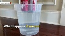 why-diet-coke-floats-but-regular-coke-sinks-in-water