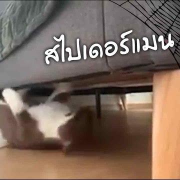 ทาสแมวแหลง !! เดินธรรมดามนุษย์ไม่มอง งานนี้เลยต้องสวมวิญญาณสไปเดอร์แมน