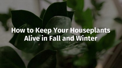 Houseplants Get Ready For Fall And Winter