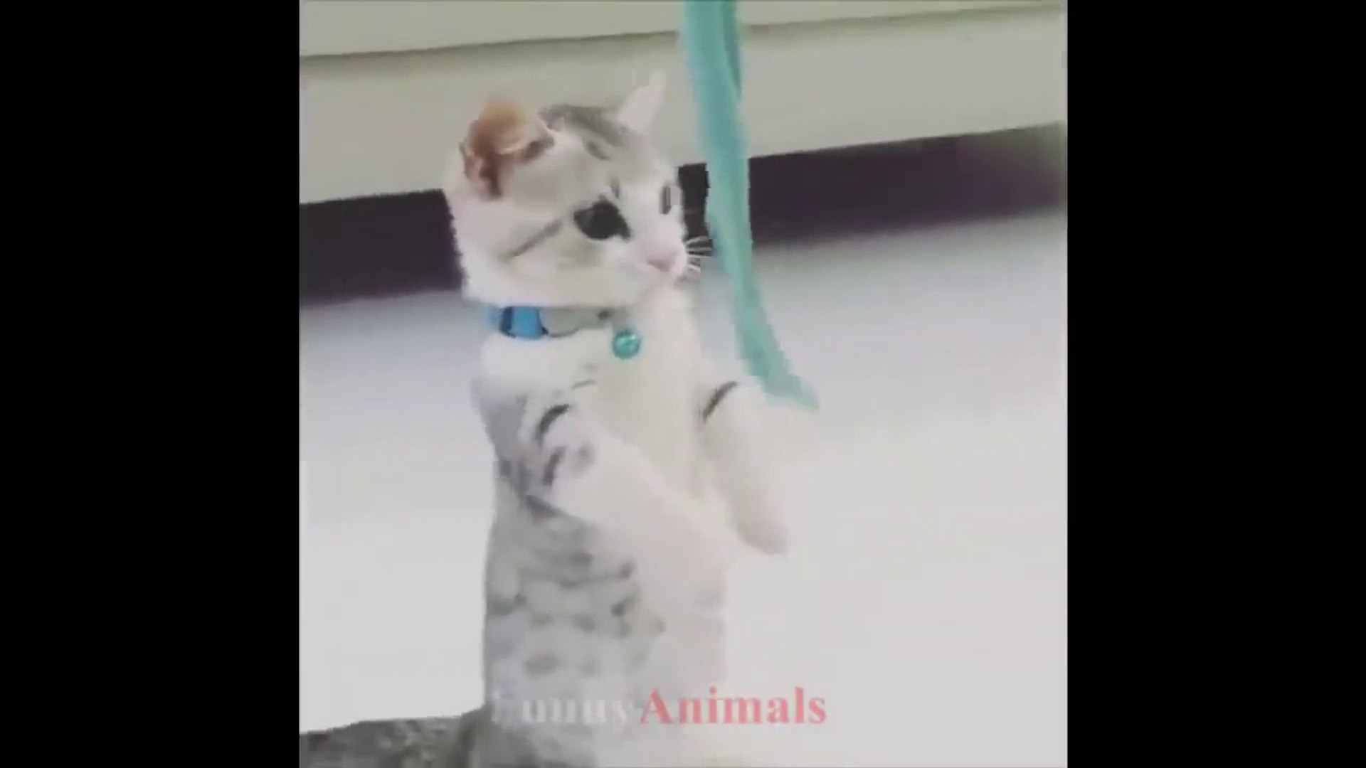 Cute kittens funny videos compilation