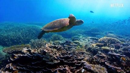David Attenborough Ett liv på vår planet Film