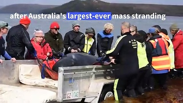 Hopes fade for stranded whales in Australia